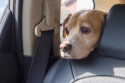Toby in Car-2010778